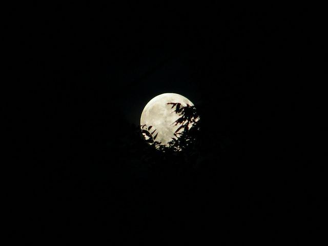 満月- Fullmoon / emrank
