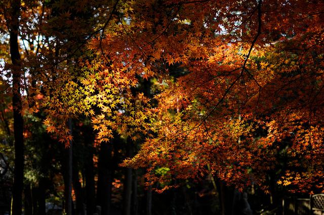 """紅葉 autumn colors / """"KIUKO"""""""